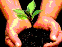 1,000 saplings to be planted in Kannur