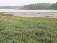 Aranmula Project: Green Panel Yet to Give Nod for Fresh Study