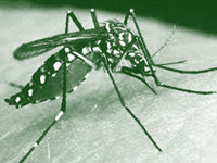 Civic body, industries trade charges over dengue outbreak