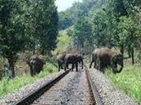 Rs 100 crore project to stop elephant deaths