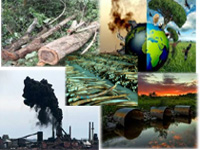 Environment related crimes down 11% in 2015: NCRB