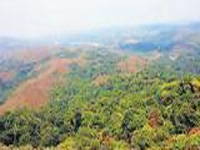 Green cover battling for survival in Karnataka