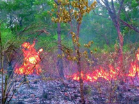 Forest fires continue in Trikuta hills in Katra
