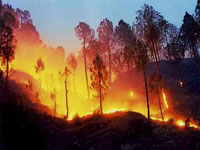 Forest fires break out in Nainital, Champawat