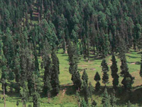 Protecting forests necessary to conserve environment