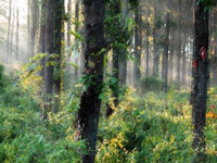 Draft National Forest Policy sets up another battle over Forest Rights Act
