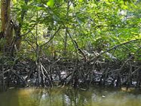 Ensure there is no destruction of mangroves, NGT tells govt