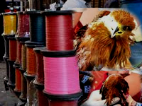 Sale of coated manja continues despite NGT ban