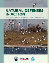 Natural defenses in action: harnessing nature to protect our communities