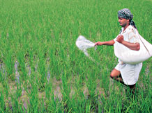 Genetically modified crops' field trials put on hold