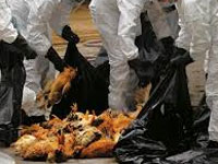 Precautions taken against bird flu outbreak in Erode