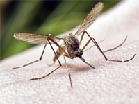 Dengue, malaria cases on the rise