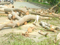 Civic body axes trees in green zone