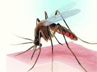 239 new dengue cases reported from Bengal districts