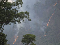 Forest fires trigger respiratory ailments among villagers living near jungles