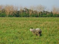 Kaziranga to be divided into two wildlife divisions