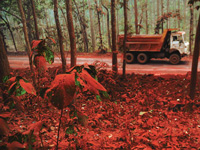 District forest department to take mining review