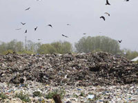 Ghazipur landfill site: NGT summons commissioners of police, EDMC