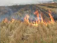 Curb burning of crop residue, officials told